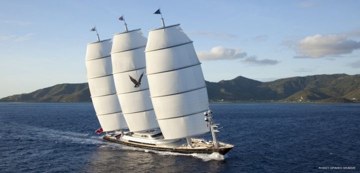 Photo of Maltese Falcon